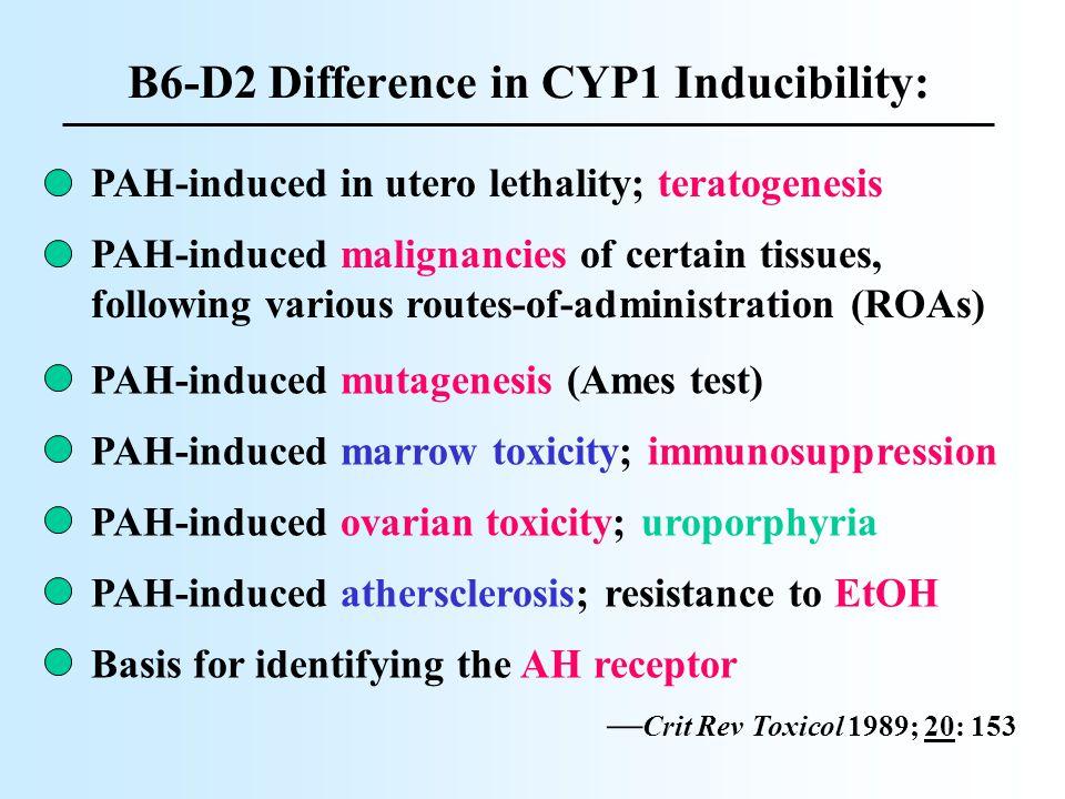 Cyp1a1(-/-) Cyp1a1/1b1(-/-) Cyp1a1/1b1(-/-) has greater BaP body burden but shows less toxicity than Cyp1a1(-/-)..!