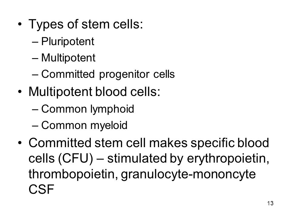 Types of stem cells: –Pluripotent –Multipotent –Committed progenitor cells Multipotent blood cells: –Common lymphoid –Common myeloid Committed stem cell makes specific blood cells (CFU) – stimulated by erythropoietin, thrombopoietin, granulocyte-mononcyte CSF 13