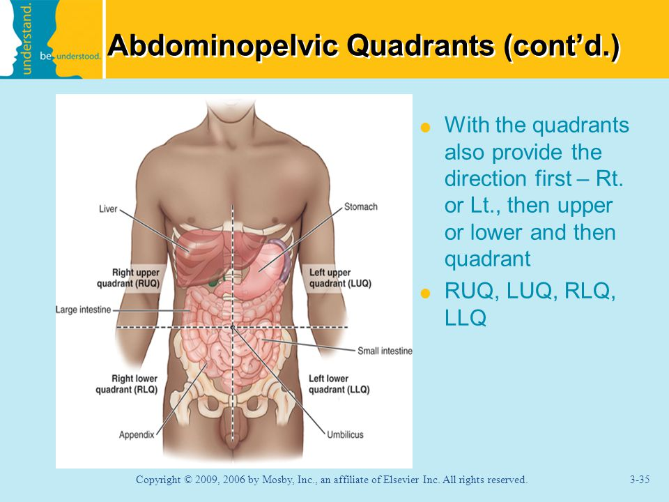 Abdominopelvic Quadrants (cont'd.)  With the quadrants also provide the direction first – Rt.