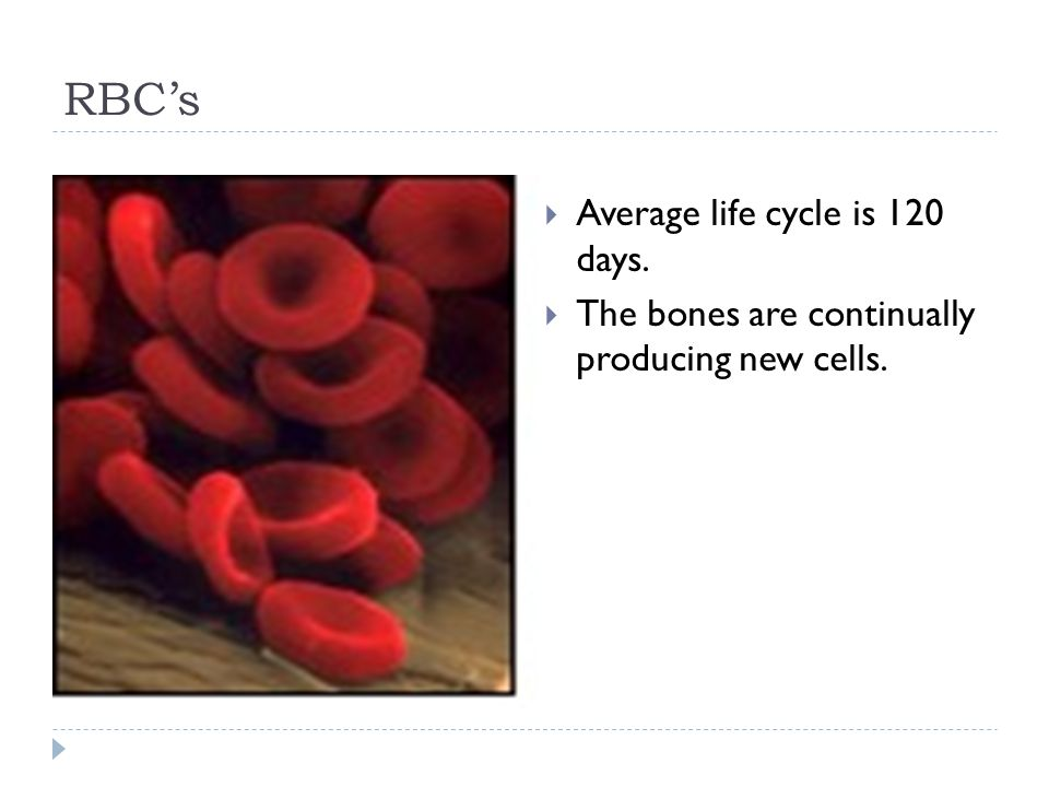 RBC's  Average life cycle is 120 days.  The bones are continually producing new cells.
