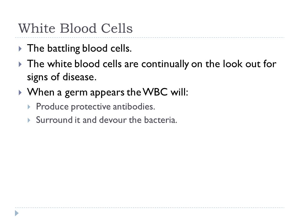 White Blood Cells  The battling blood cells.
