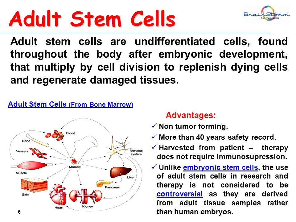 Adult stem cells are undifferentiated cells, found throughout the body after embryonic development, that multiply by cell division to replenish dying cells and regenerate damaged tissues.