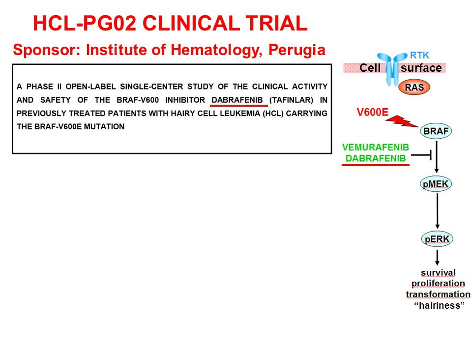 """Cell surface HCL-PG02 CLINICAL TRIAL Sponsor: Institute of Hematology, Perugia """"hairiness"""""""