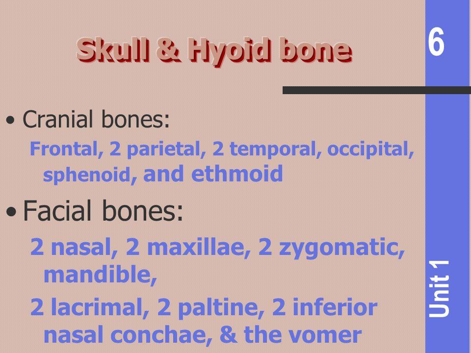 6 Unit 1 Cranial bones: Frontal, 2 parietal, 2 temporal, occipital, sphenoid, and ethmoid Facial bones: 2 nasal, 2 maxillae, 2 zygomatic, mandible, 2
