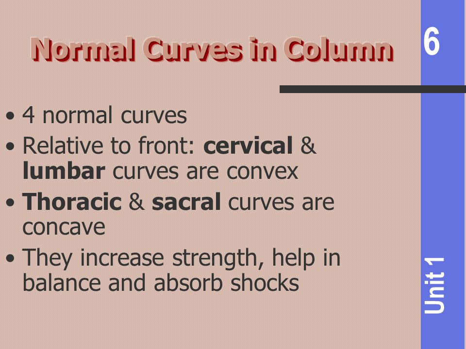6 Unit 1 4 normal curves Relative to front: cervical & lumbar curves are convex Thoracic & sacral curves are concave They increase strength, help in b