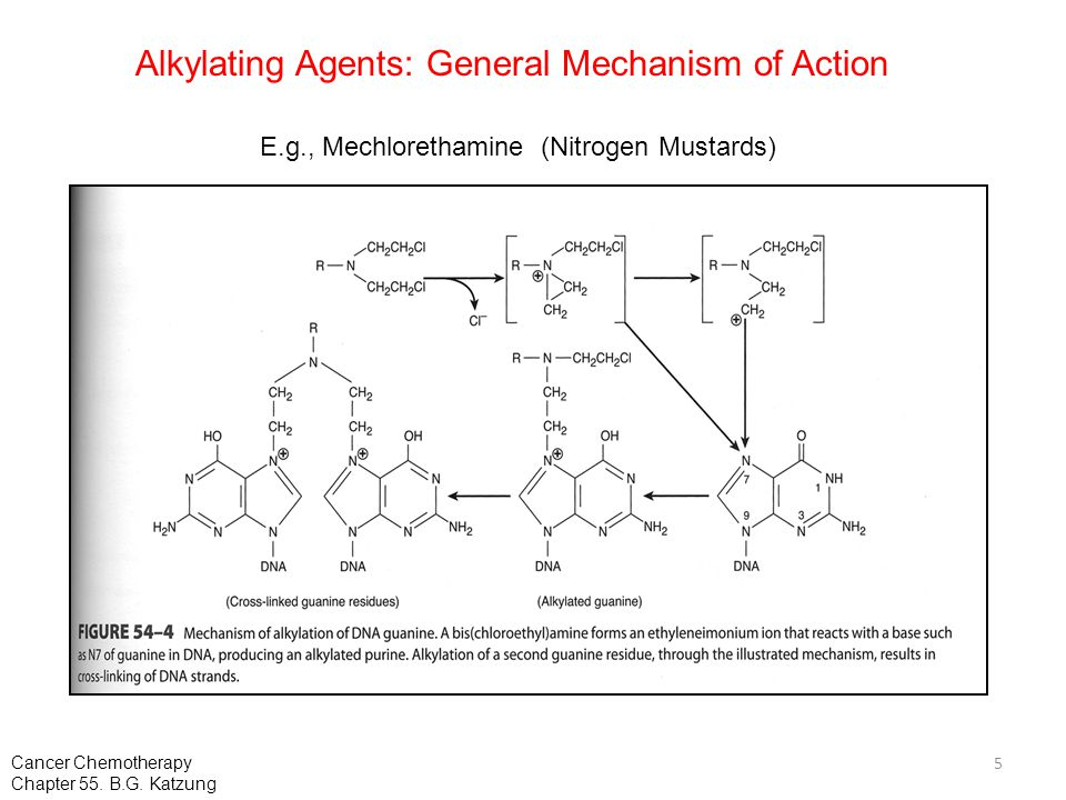 Alkylating Agents: General Mechanism of Action E.g., Mechlorethamine (Nitrogen Mustards) 5 Cancer Chemotherapy Chapter 55. B.G. Katzung