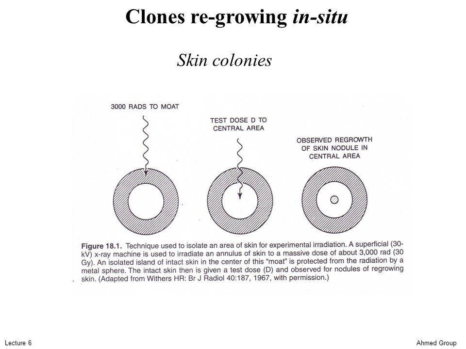 Ahmed Group Lecture 6 Clones re-growing in-situ Skin colonies