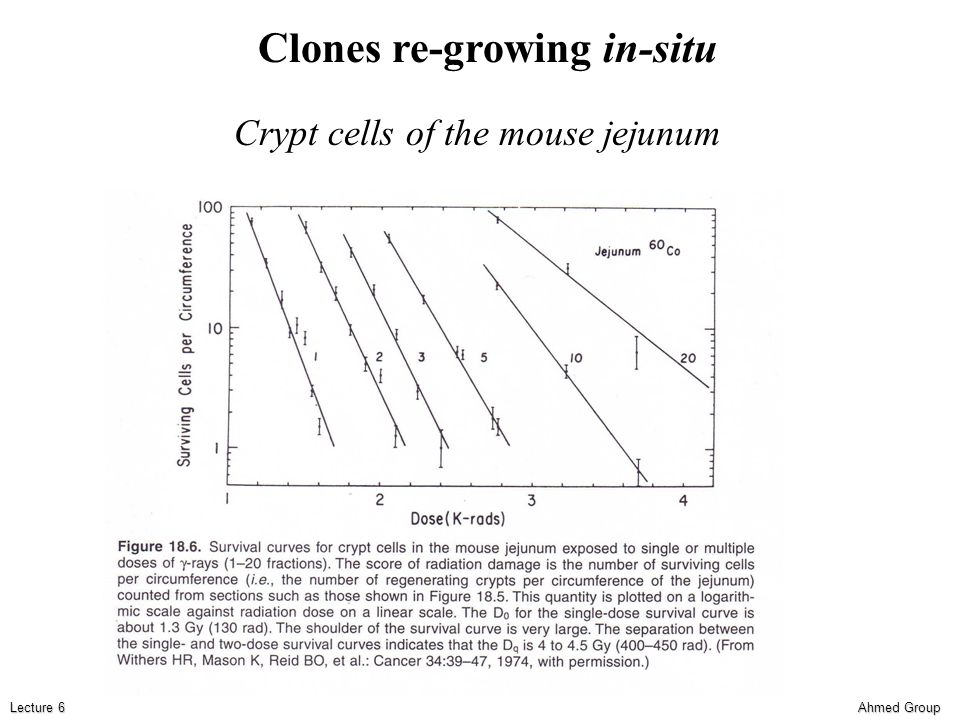 Ahmed Group Lecture 6 Crypt cells of the mouse jejunum Clones re-growing in-situ