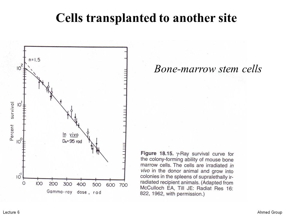 Ahmed Group Lecture 6 Cells transplanted to another site Bone-marrow stem cells