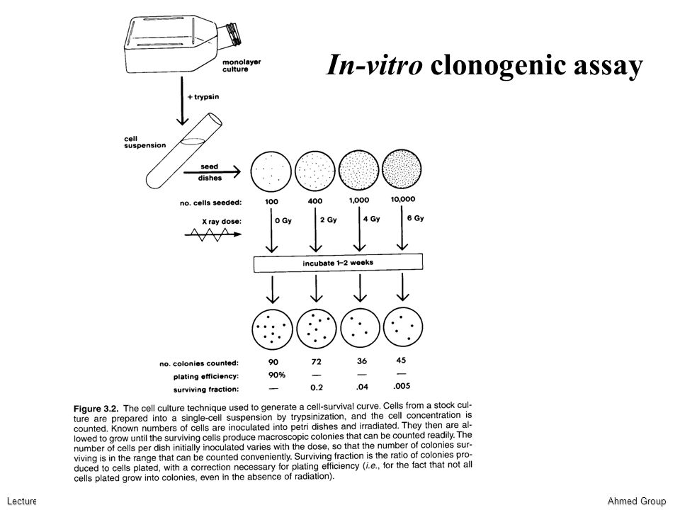 Ahmed Group Lecture 6 Functional endpoints Dose-response relationships The parameters of the dose-response curve for any normal tissue system for which a functional endpoint can be observed may be inferred by performing multifractionexperiment and estimating the α/β ratio.