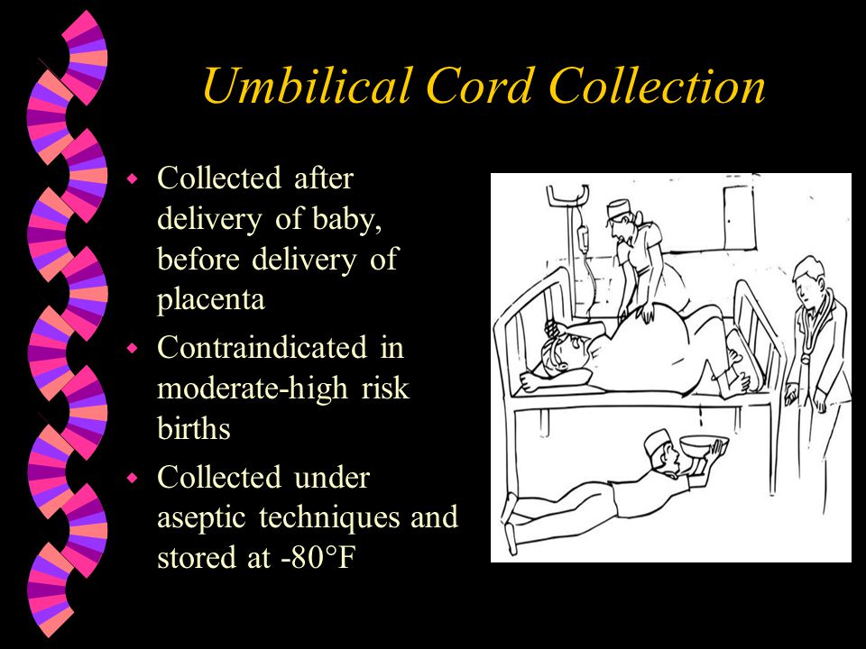 Umbilical Cord Collection w Collected after delivery of baby, before delivery of placenta w Contraindicated in moderate-high risk births w Collected under aseptic techniques and stored at -80  F