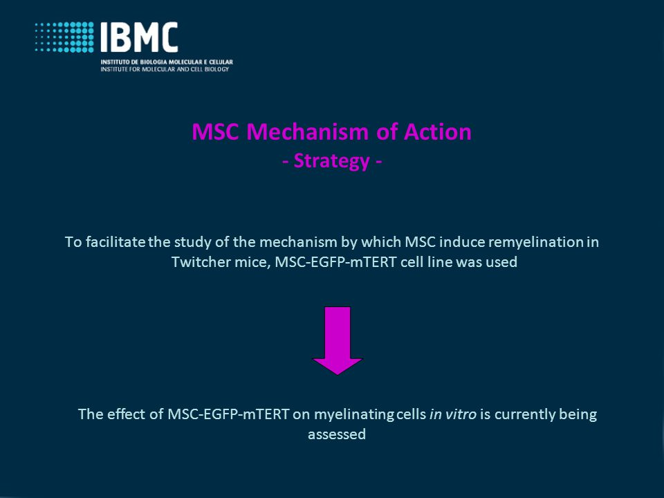 MSC Mechanism of Action - Strategy - To facilitate the study of the mechanism by which MSC induce remyelination in Twitcher mice, MSC-EGFP-mTERT cell line was used The effect of MSC-EGFP-mTERT on myelinating cells in vitro is currently being assessed
