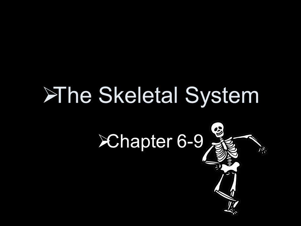 The Skeletal System  Chapter 6-9