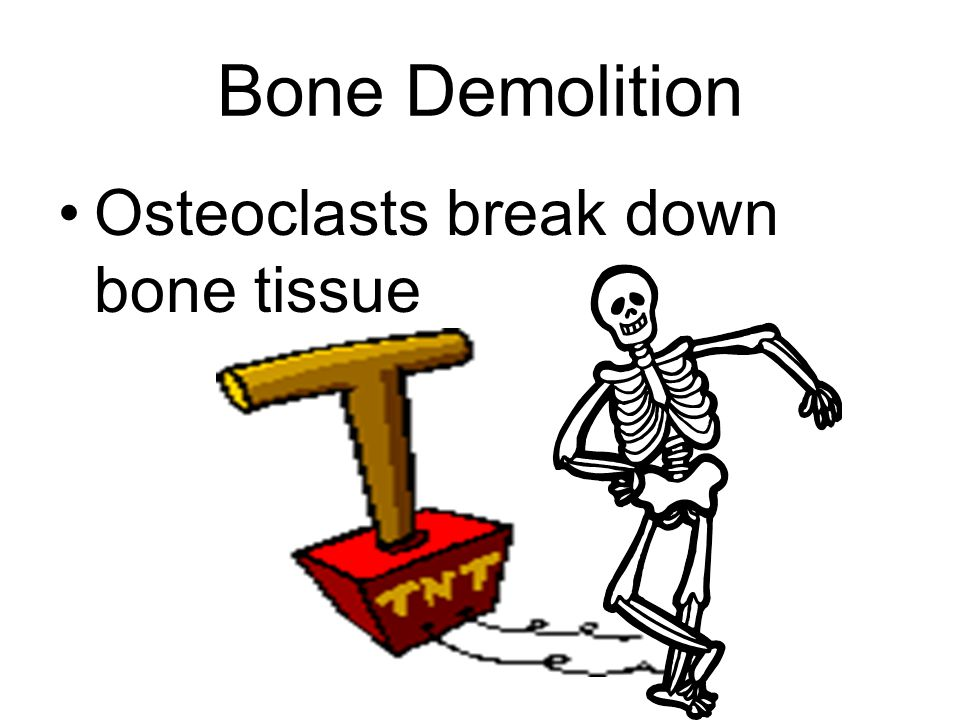 –Bone formation, lengthening continues until the two ossified areas meet.