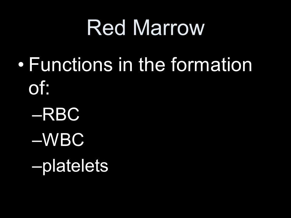 Liver Spleen Bone marrow –Red marrow –(Yellow marrow)