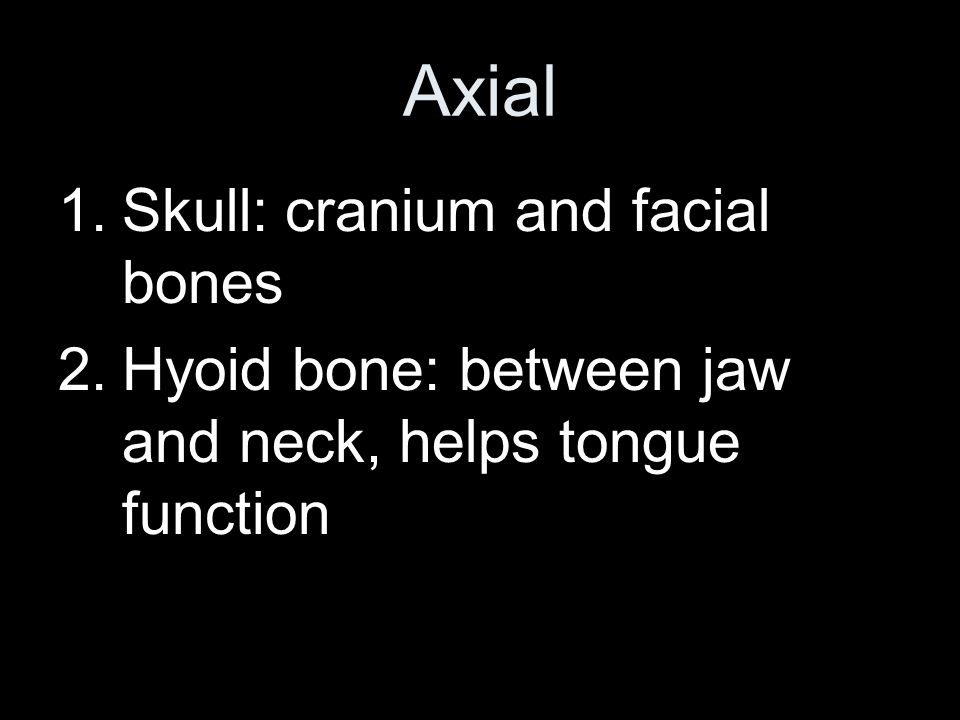 Organization 2 major portions –Axial: head, neck, and trunk –Appendicular: limbs and anchoring parts