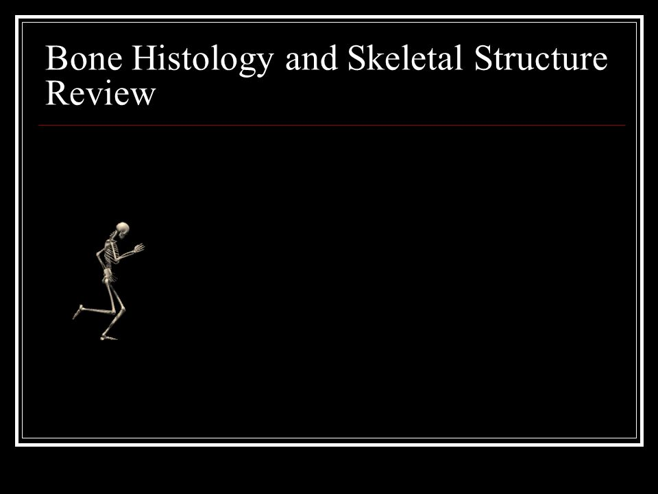Bone Histology and Skeletal Structure Review