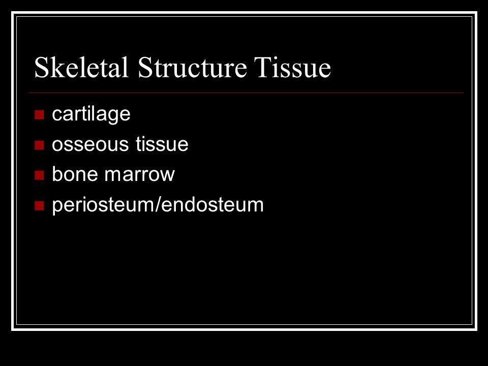 Skeletal Structure Tissue cartilage osseous tissue bone marrow periosteum/endosteum