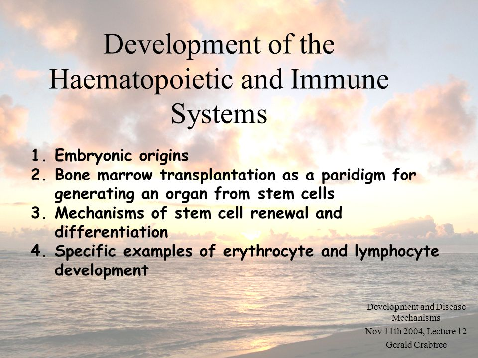 Development of the Haematopoietic and Immune Systems Development and Disease Mechanisms Nov 11th 2004, Lecture 12 Gerald Crabtree 1.Embryonic origins