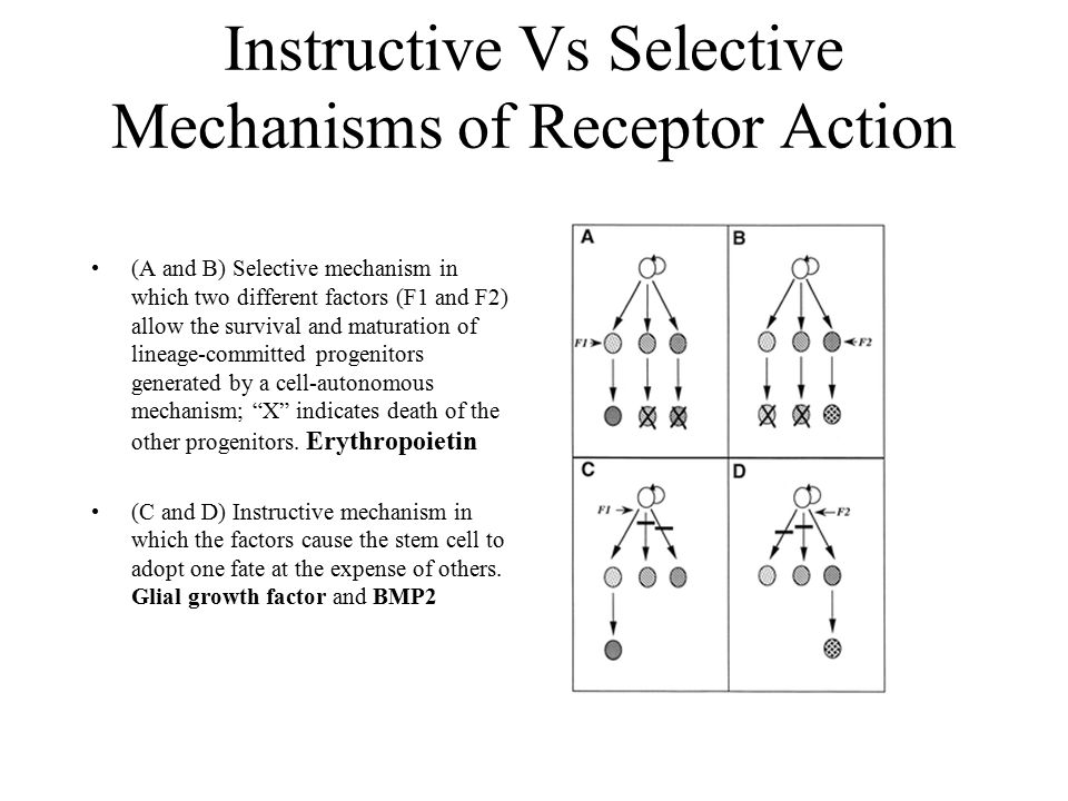 Instructive Vs Selective Mechanisms of Receptor Action (A and B) Selective mechanism in which two different factors (F1 and F2) allow the survival and