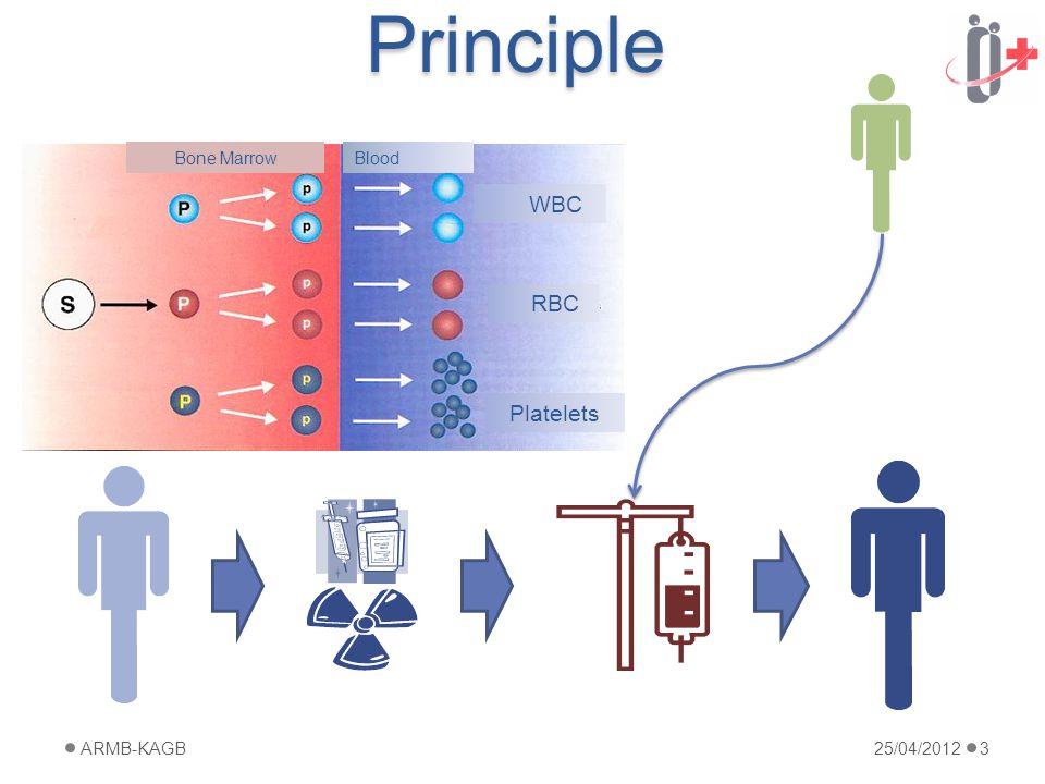 Principle 25/04/2012ARMB-KAGB3 Blood RBC Platelets WBC Bone Marrow