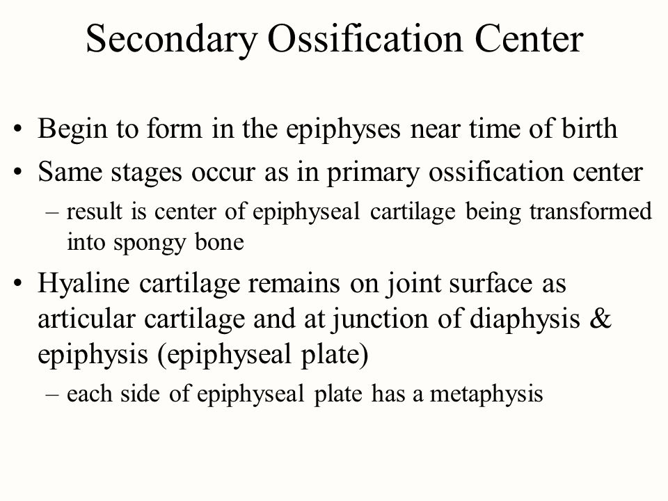 Secondary Ossification Center Begin to form in the epiphyses near time of birth Same stages occur as in primary ossification center –result is center of epiphyseal cartilage being transformed into spongy bone Hyaline cartilage remains on joint surface as articular cartilage and at junction of diaphysis & epiphysis (epiphyseal plate) –each side of epiphyseal plate has a metaphysis