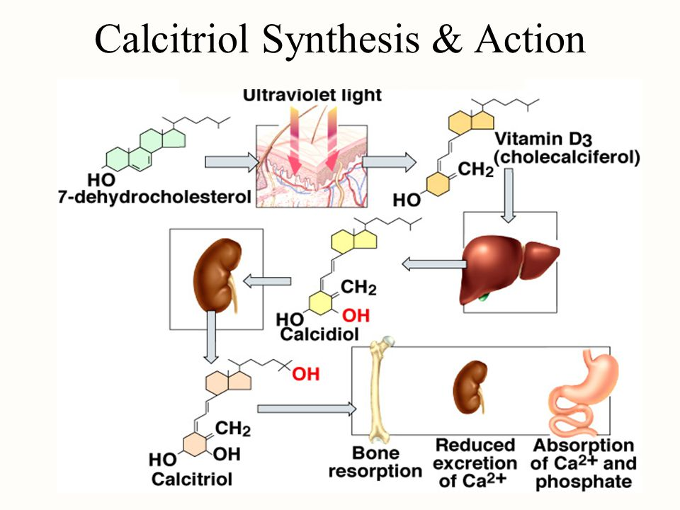 Calcitriol Synthesis & Action