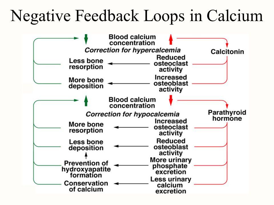 Negative Feedback Loops in Calcium