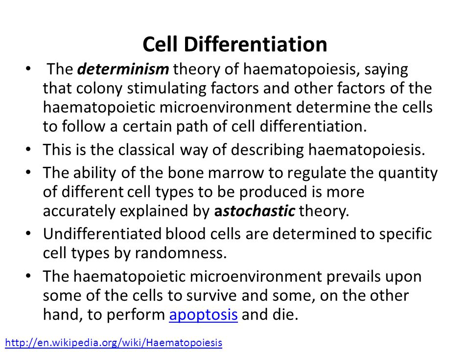 The determinism theory of haematopoiesis, saying that colony stimulating factors and other factors of the haematopoietic microenvironment determine the cells to follow a certain path of cell differentiation.