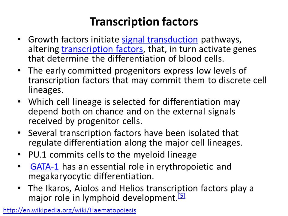Transcription factors Growth factors initiate signal transduction pathways, altering transcription factors, that, in turn activate genes that determine the differentiation of blood cells.signal transductiontranscription factors The early committed progenitors express low levels of transcription factors that may commit them to discrete cell lineages.