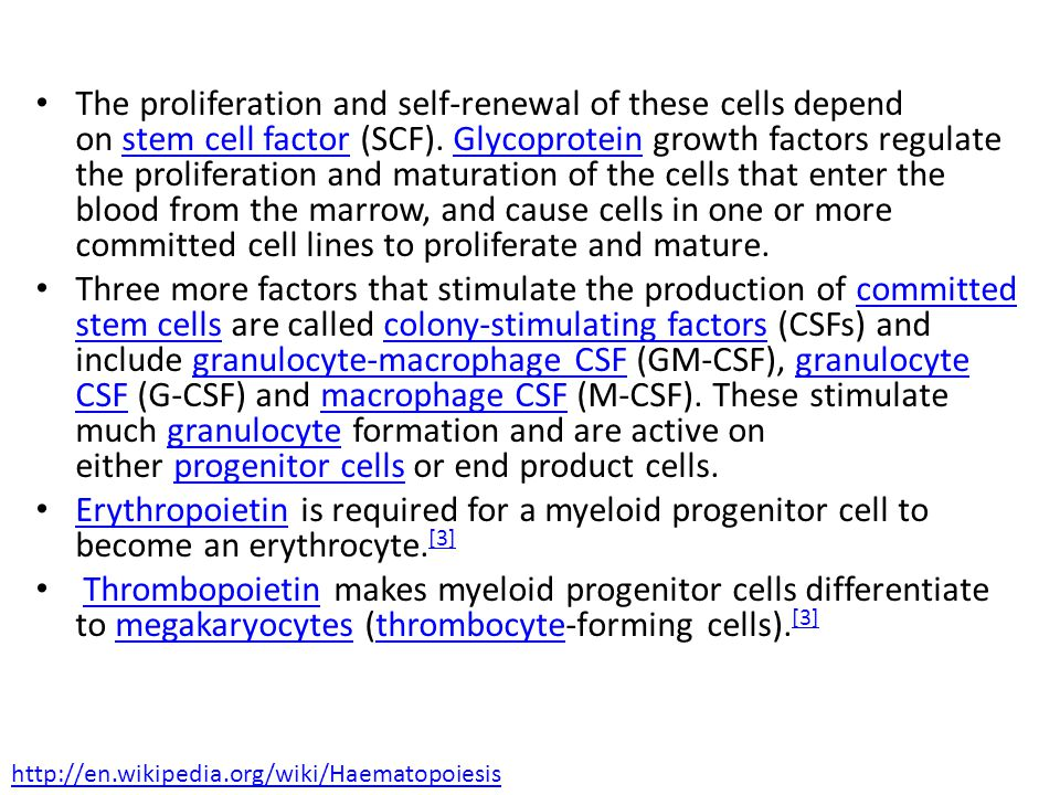 The proliferation and self-renewal of these cells depend on stem cell factor (SCF).