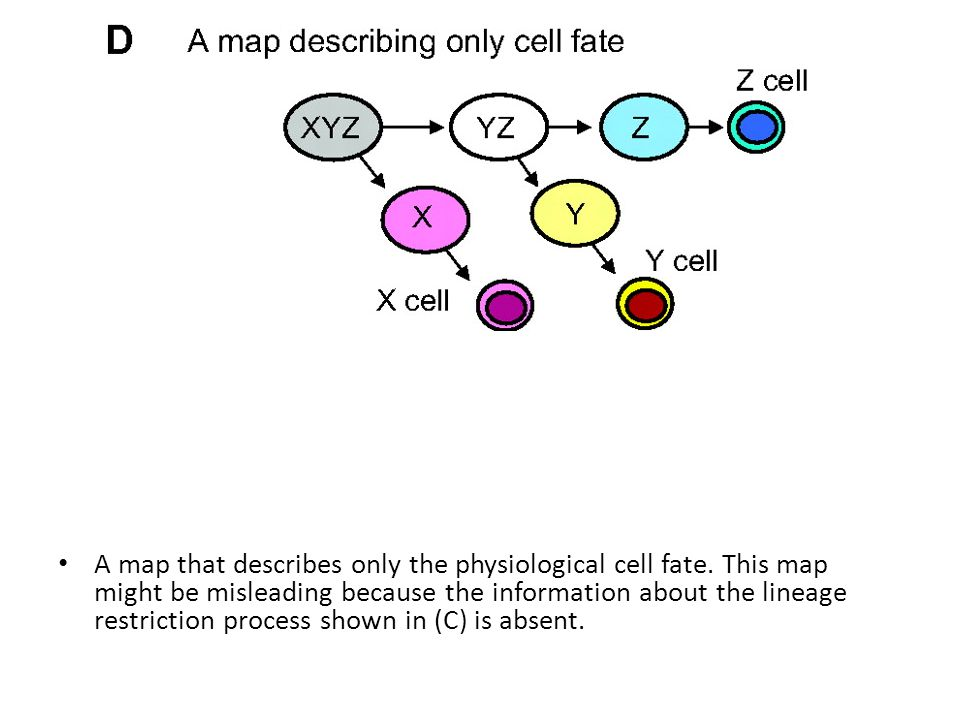 A map that describes only the physiological cell fate.