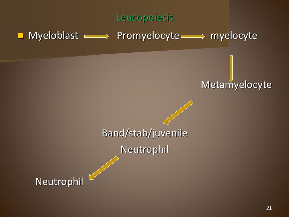Leucopoiesis Myeloblast Promyelocyte myelocyte Myeloblast Promyelocyte myelocyte Metamyelocyte MetamyelocyteBand/stab/juvenileNeutrophil Neutrophil Neutrophil 21