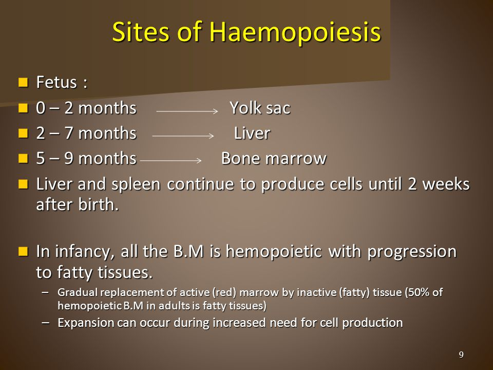 Sites of Haemopoiesis Fetus : Fetus : 0 – 2 months Yolk sac 0 – 2 months Yolk sac 2 – 7 months Liver 2 – 7 months Liver 5 – 9 months Bone marrow 5 – 9 months Bone marrow Liver and spleen continue to produce cells until 2 weeks after birth.