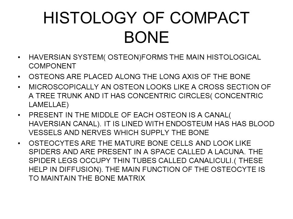 HISTOLOGY OF COMPACT BONE HAVERSIAN SYSTEM( OSTEON)FORMS THE MAIN HISTOLOGICAL COMPONENT OSTEONS ARE PLACED ALONG THE LONG AXIS OF THE BONE MICROSCOPICALLY AN OSTEON LOOKS LIKE A CROSS SECTION OF A TREE TRUNK AND IT HAS CONCENTRIC CIRCLES( CONCENTRIC LAMELLAE) PRESENT IN THE MIDDLE OF EACH OSTEON IS A CANAL( HAVERSIAN CANAL).
