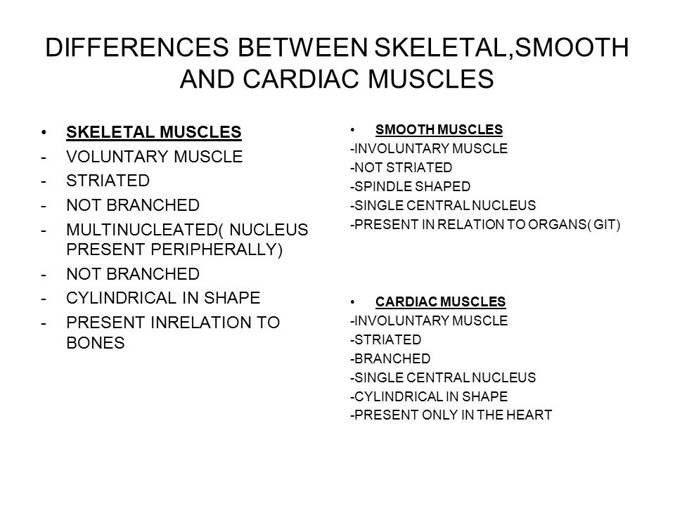 DIFFERENCES BETWEEN SKELETAL,SMOOTH AND CARDIAC MUSCLES SKELETAL MUSCLES -VOLUNTARY MUSCLE -STRIATED -NOT BRANCHED -MULTINUCLEATED( NUCLEUS PRESENT PERIPHERALLY) -NOT BRANCHED -CYLINDRICAL IN SHAPE -PRESENT INRELATION TO BONES SMOOTH MUSCLES -INVOLUNTARY MUSCLE -NOT STRIATED -SPINDLE SHAPED -SINGLE CENTRAL NUCLEUS -PRESENT IN RELATION TO ORGANS( GIT) CARDIAC MUSCLES -INVOLUNTARY MUSCLE -STRIATED -BRANCHED -SINGLE CENTRAL NUCLEUS -CYLINDRICAL IN SHAPE -PRESENT ONLY IN THE HEART