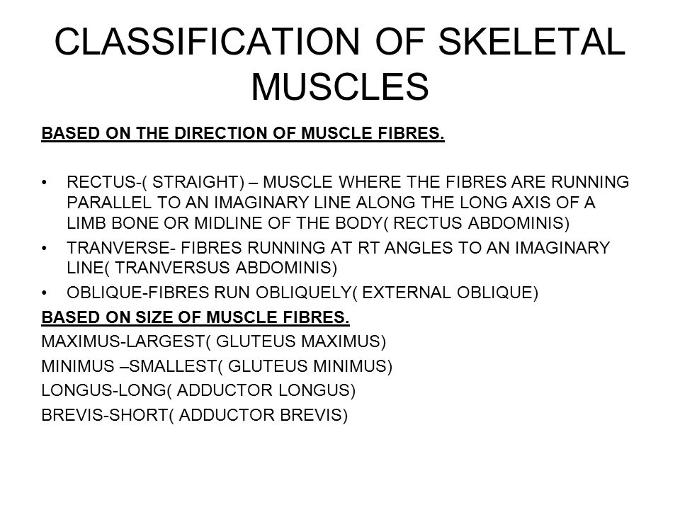 CLASSIFICATION OF SKELETAL MUSCLES BASED ON THE DIRECTION OF MUSCLE FIBRES.