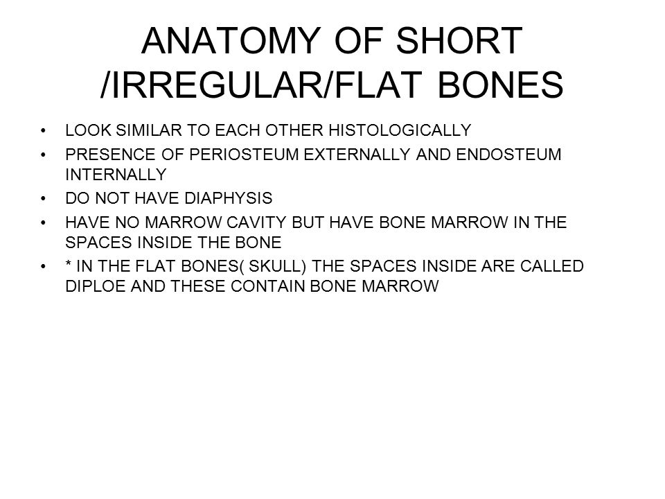 ANATOMY OF SHORT /IRREGULAR/FLAT BONES LOOK SIMILAR TO EACH OTHER HISTOLOGICALLY PRESENCE OF PERIOSTEUM EXTERNALLY AND ENDOSTEUM INTERNALLY DO NOT HAVE DIAPHYSIS HAVE NO MARROW CAVITY BUT HAVE BONE MARROW IN THE SPACES INSIDE THE BONE * IN THE FLAT BONES( SKULL) THE SPACES INSIDE ARE CALLED DIPLOE AND THESE CONTAIN BONE MARROW