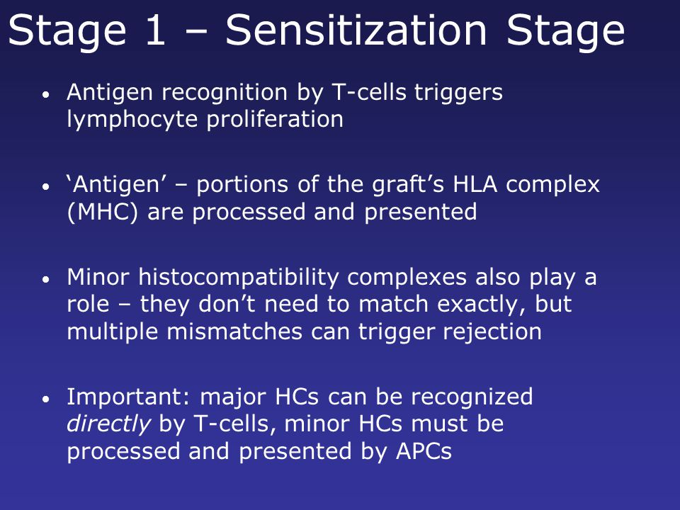Stage 1 – Sensitization Stage Antigen recognition by T-cells triggers lymphocyte proliferation 'Antigen' – portions of the graft's HLA complex (MHC) are processed and presented Minor histocompatibility complexes also play a role – they don't need to match exactly, but multiple mismatches can trigger rejection Important: major HCs can be recognized directly by T-cells, minor HCs must be processed and presented by APCs