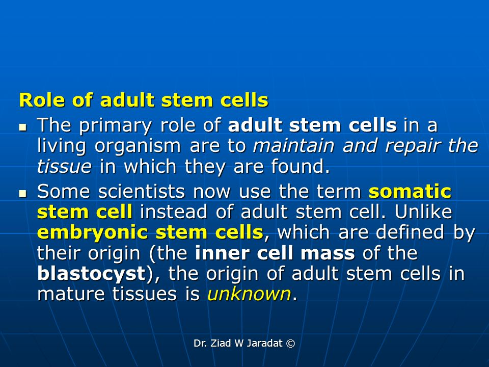 Dr.Ziad W Jaradat © What are the tests used for identifying adult stem cells.