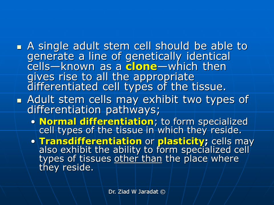 Dr. Ziad W Jaradat © A single adult stem cell should be able to generate a line of genetically identical cells—known as a clone—which then gives rise