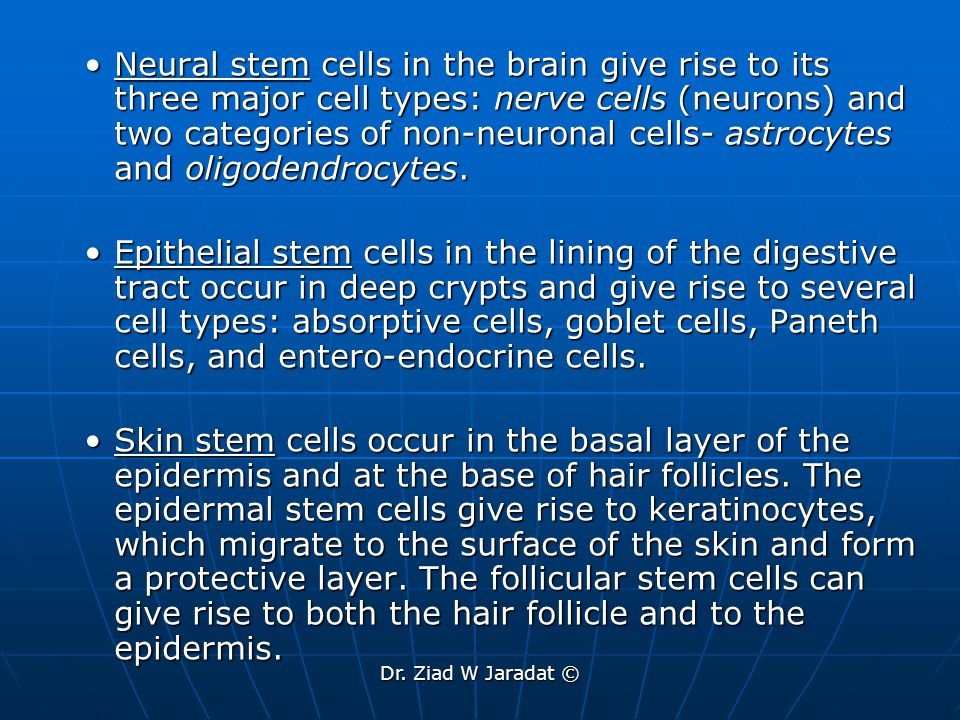 What are the potential uses of human stem cells.