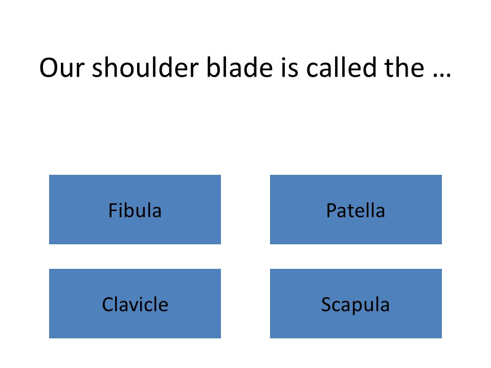 Our shoulder blade is called the … FibulaPatella ClavicleScapula