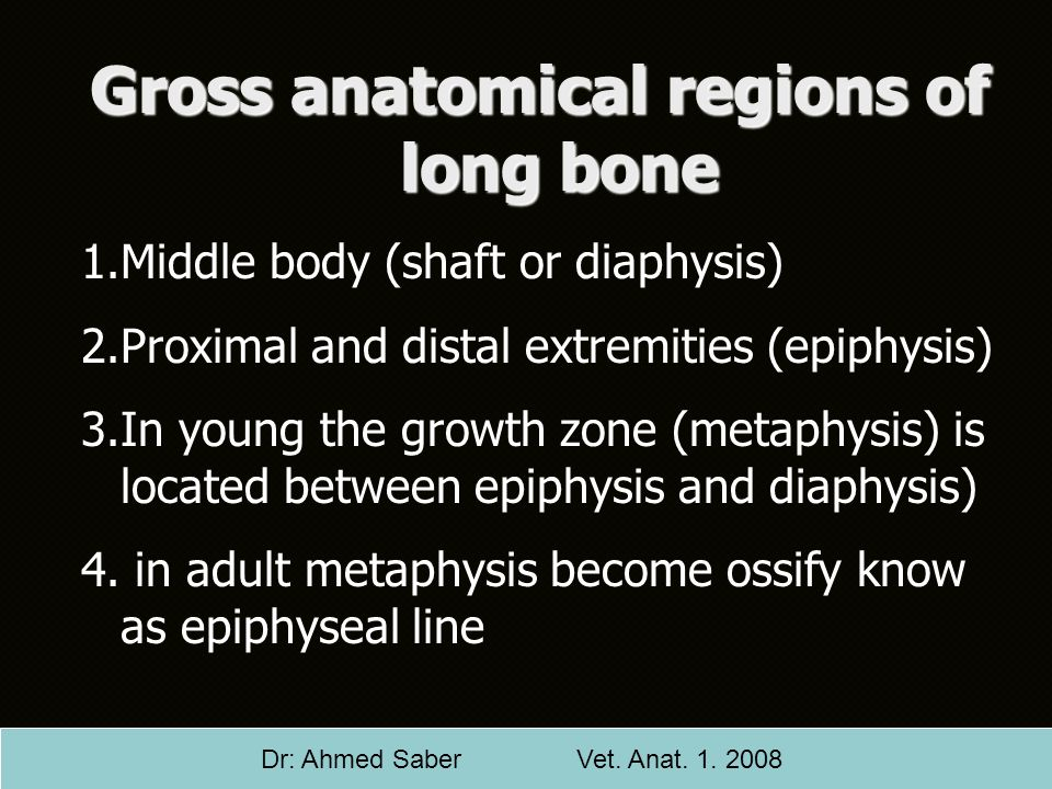 Gross anatomical regions of long bone 1.Middle body (shaft or diaphysis) 2.Proximal and distal extremities (epiphysis) 3.In young the growth zone (met