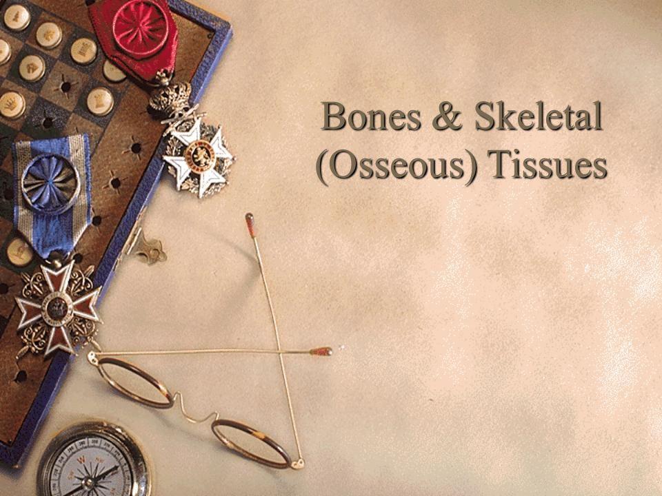 Bones & Skeletal (Osseous) Tissues