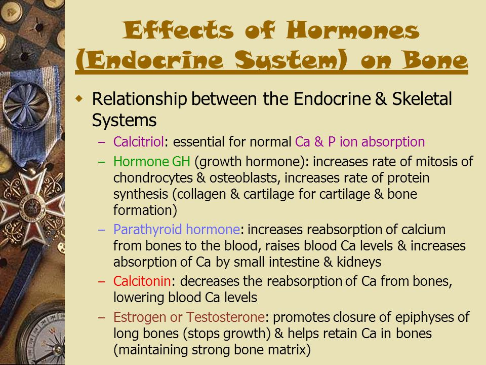 Effects of Hormones (Endocrine System) on Bone  Relationship between the Endocrine & Skeletal Systems – Calcitriol: essential for normal Ca & P ion a