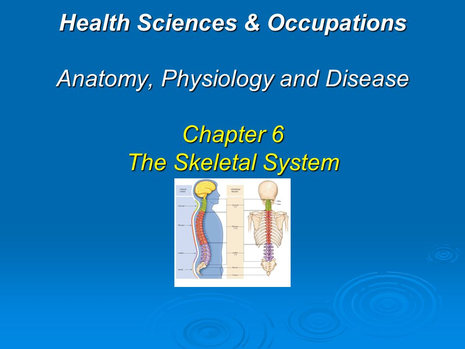 Health Sciences & Occupations Anatomy, Physiology and Disease Chapter 6 The Skeletal System