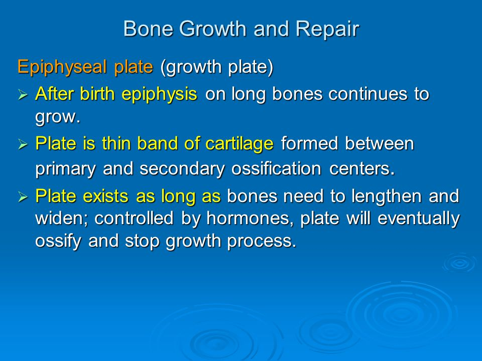 Bone Growth and Repair Epiphyseal plate (growth plate)  After birth epiphysis on long bones continues to grow.  Plate is thin band of cartilage form