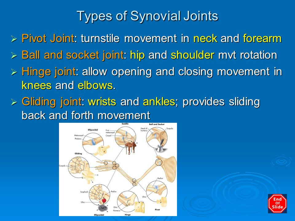Types of Synovial Joints  Pivot Joint: turnstile movement in neck and forearm  Ball and socket joint: hip and shoulder mvt rotation  Hinge joint: a
