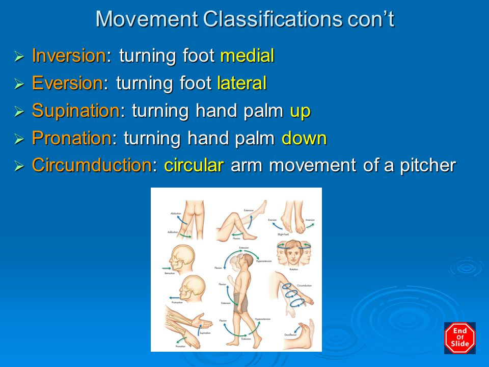 Movement Classifications con't  Inversion: turning foot medial  Eversion: turning foot lateral  Supination: turning hand palm up  Pronation: turni